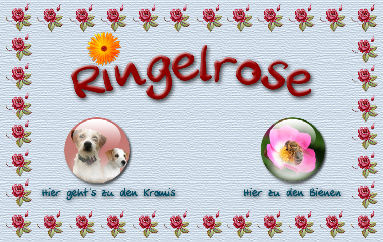 Logo Ringelrose mit Links